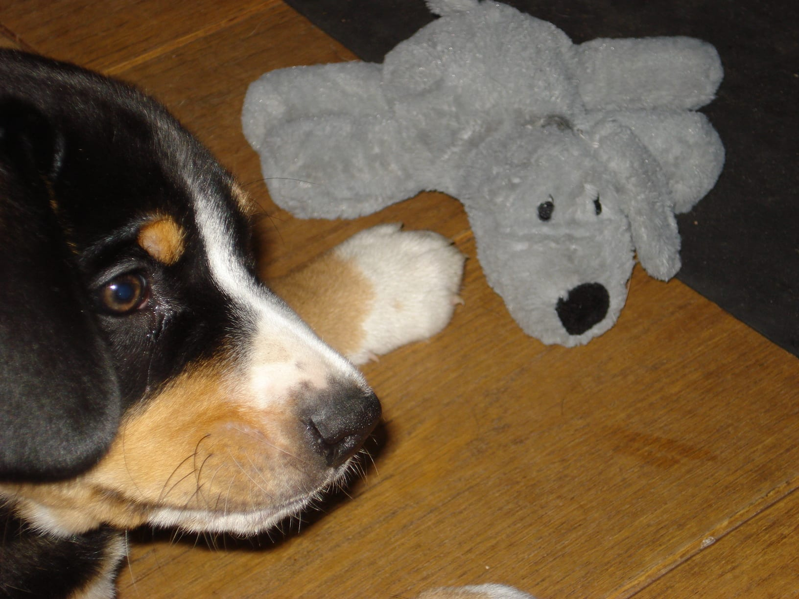Ari and his teddy
