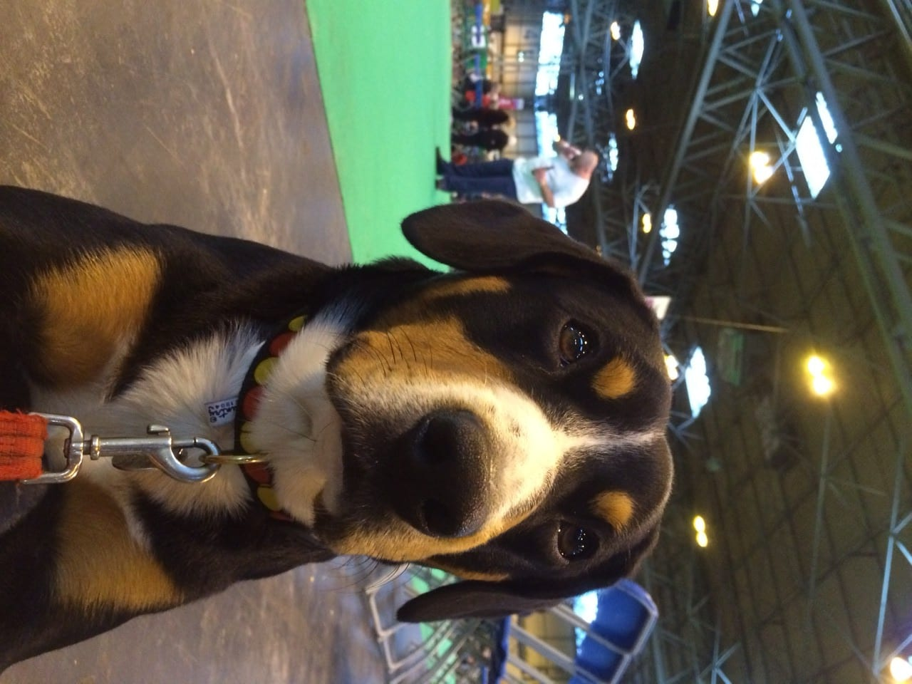 Basil at Crufts