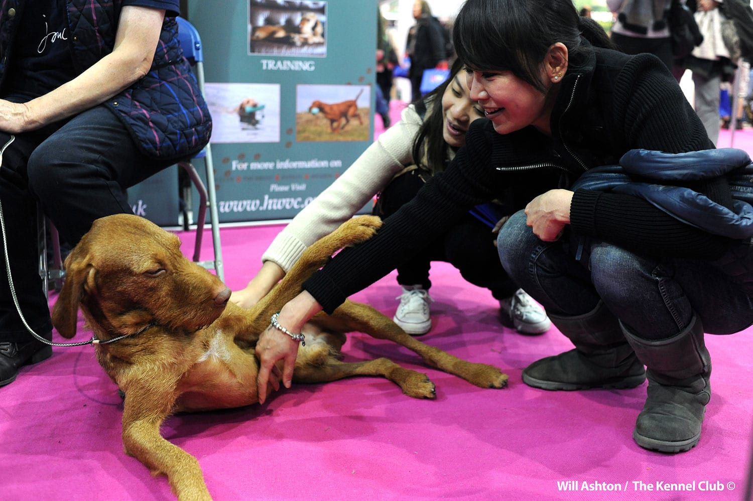 discover dogs pet show